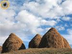 Фотография стогов сена в горах КЧР