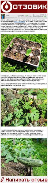 Семена кабачка цуккини Уральский Дачник «Зебра» - всходят не сразу, а скорее неожиданно