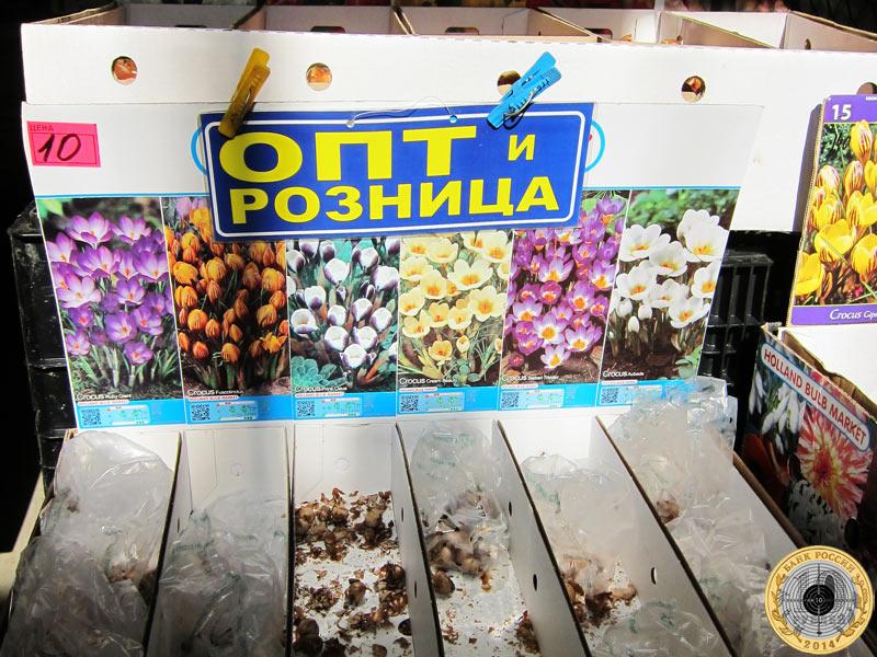 Мелкие луковицы крокусов продавались по десять рублей за штуку