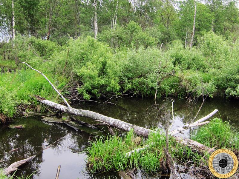 Ручей в лесу у Павловских Дач