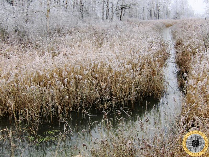 Ручей у Павловских Дач в начале ноября